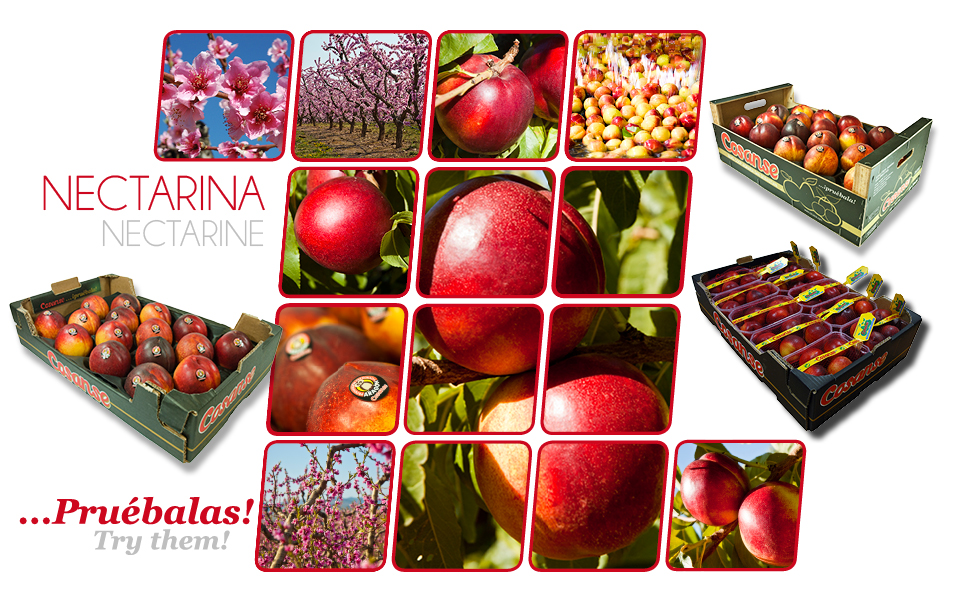Commercial catalogue: Nectarine COSANSE