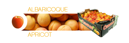 Commercial catalog: Apricot